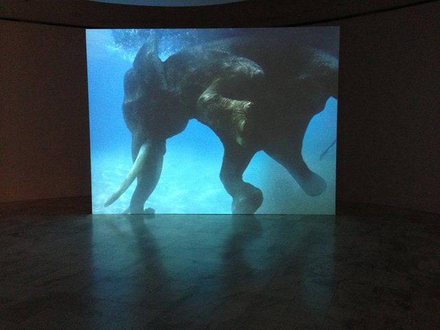 Sheba Chhachhi, The Water Diviner, 2008 Video projection (based on photographs by Umeed Mistry), color, silent, 3 min.